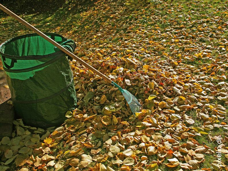 Herbstlaub_RainerSturm_pixelio.de.web
